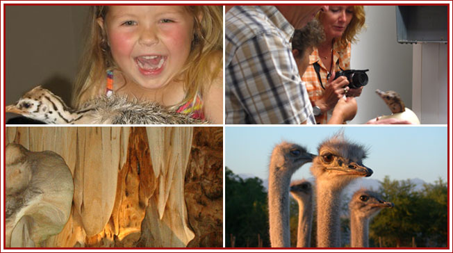 Oudtshoorn Itineraries - Ostrich Farm Tours