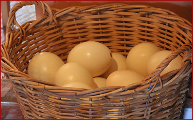 Ostrich Eggs - Mooiplaas Country Guesthouse