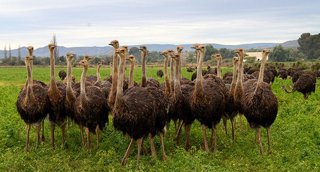 Ostrich Meat - Mooiplaas Country Guesthouse